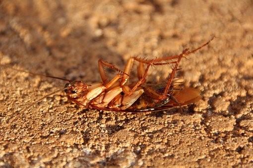 Insectos en la casa